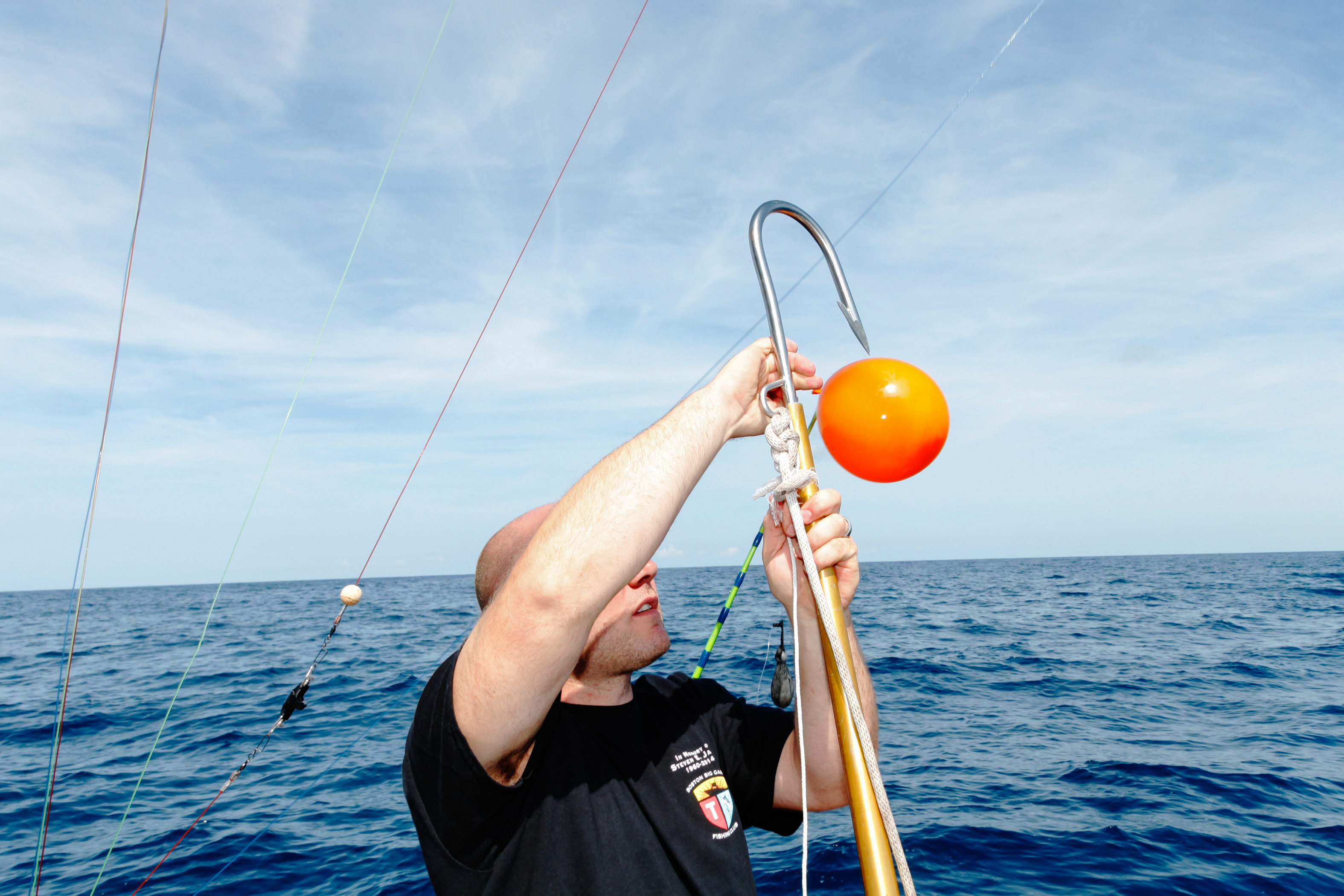 A crew member untangles the line from a hook. The balloons are used like bobbers, to spot it when the shark takes the line.